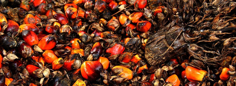 Investigamos la industria internacional de la palmaUno de Dos. El aceite de palma en tu vida diaria